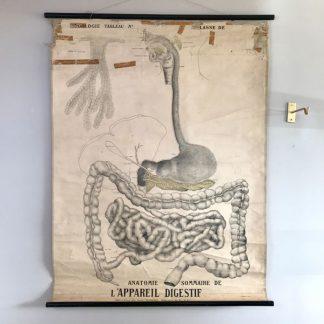 affiche-planche-scolaire-deyrolle-anatomie-appareil-digestif-2
