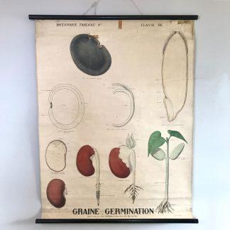deyrolle-affiche-ancienne-botanique-graine-germination-1