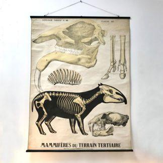 deyrolle-affiche-ancienne-geologie-mammiferes-terrain-tertiaire-1