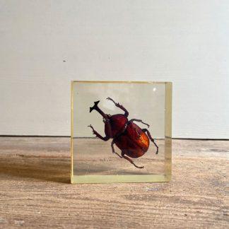 grande-inclusion-scarabee-irise-1