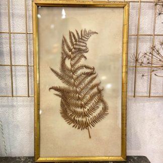 herbier-fougère-sous-verre-cadre-dore-ancien-1